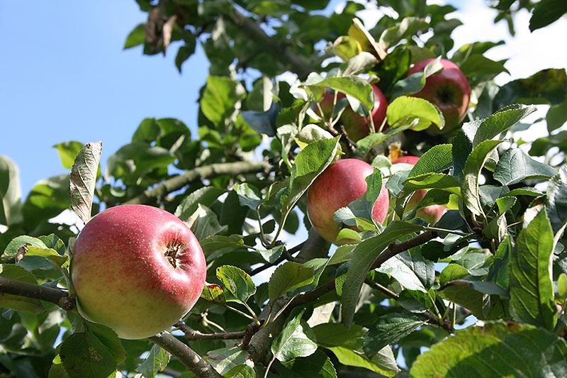 Obststreuwiese